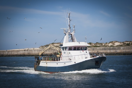 trawler net: Fishing boat returning with lots of seagulls feeding at the rear of the boat