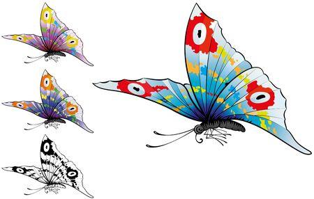 morpho: Butterflys Illustration