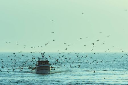 Fishing boat returning with lots of seagulls feeding at the rear of the boat photo