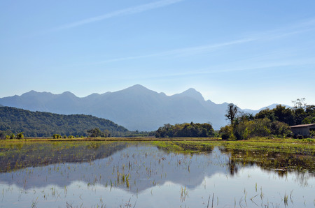 Rice Farming photo