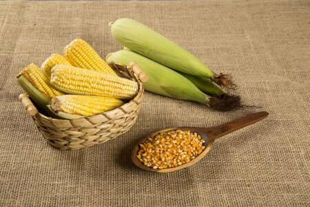 popcorn kernel: Corn maize and popcorn on a table.