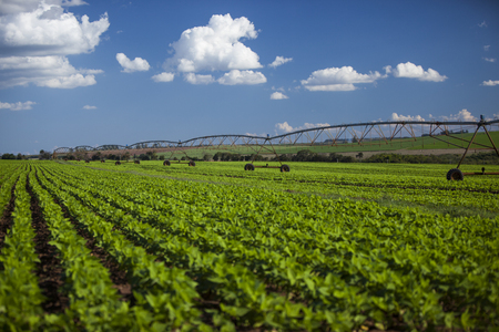 commodities: Equipo de riego industrial en el campo de la granja bajo un cielo azul en Brasil. Agricultura.