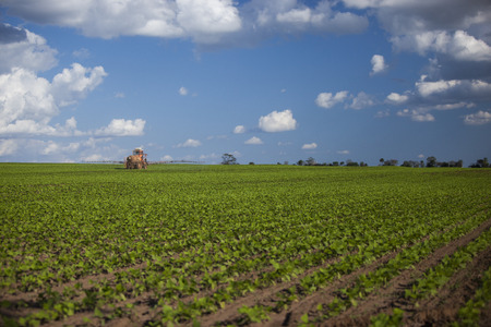 commodities: Machine working at peanut field under a blue sky. Agriculture.