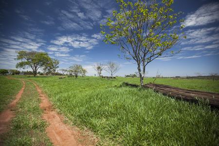 A green meadow under a blue sky. A tree and a bole beside a dirt road.