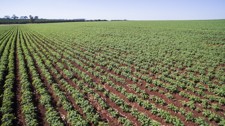 Aerial view of the Potatoes plantation in Sao Paulo State.