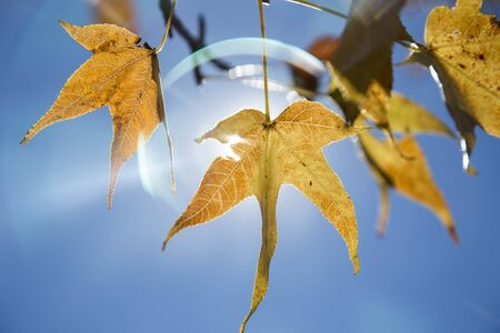 fall trees: A beautiful autumn background with falling leaves. Stock Photo