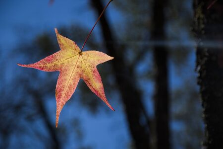 A beautiful autumn background with falling leaves Stock Photo