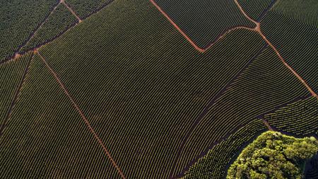 De luchtaanplanting van de meningskoffie in Minas Gerais-staat - Brazilië