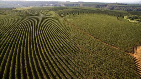 Aerial view coffee plantation in Minas Gerais state - Brazil 写真素材
