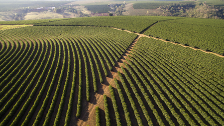 Aerial view coffee plantation in Minas Gerais state - Brazil 스톡 콘텐츠