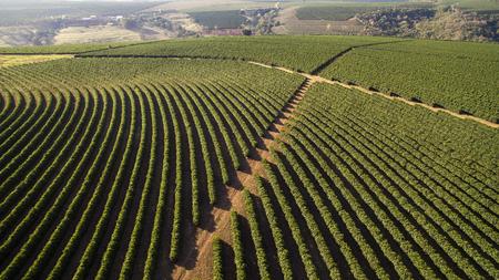 Aerial view coffee plantation in Minas Gerais state - Brazil 免版税图像