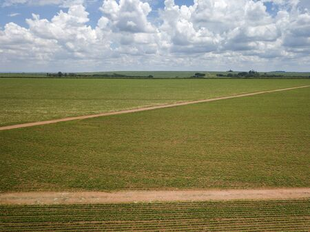 Aerial view of cultivated soybean field.