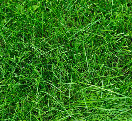 herbage: spring green grass texture for design
