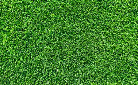 新鮮な芝生の草のトップ ビュー 写真素材