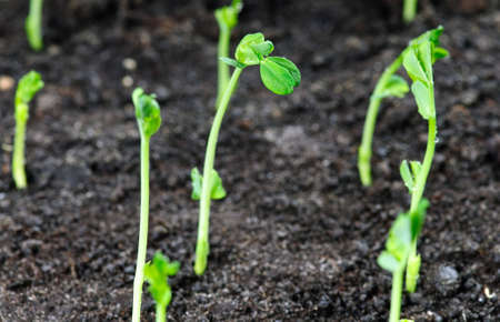 New life concept - seedlings growing in the soil.Selectiv focus on central plant Stock Photo - 5034882