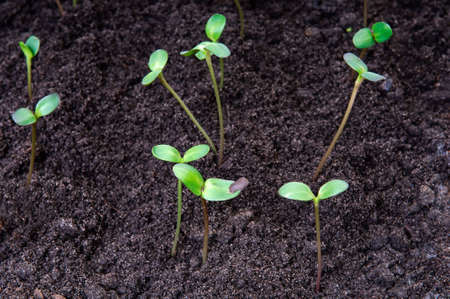 New life concept - seedlings growing in the soil Stock Photo - 5113222