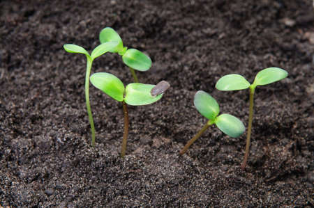 New life concept - seedlings growing in the soil Stock Photo - 5113239
