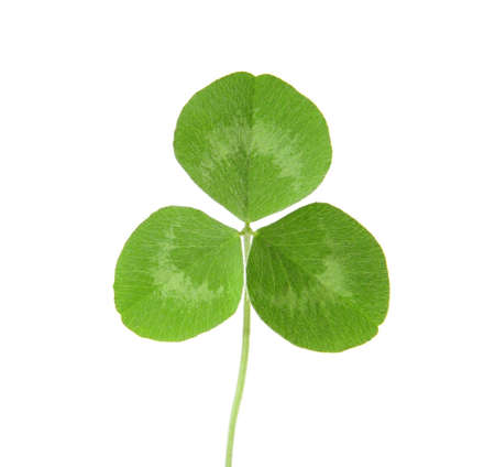 Three Leaf Clover Stock Photo - 5150515