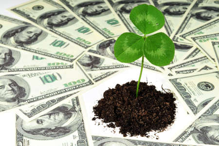 oney: Grow new  business concept - green clover plant around oney
