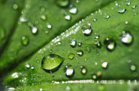 Regen druppels op een blad. Korte scherptediepte