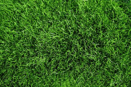 Green grass texture from a soccer field XXL size photo