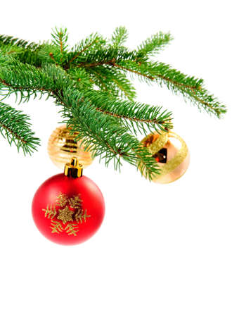 red and gold christmas ball hanging on a pine tree photo