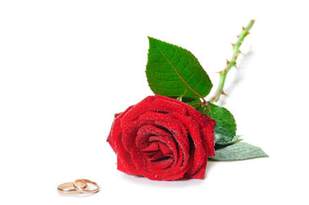 anillo de boda: hermosa rosa roja y anillos de bodas de oro