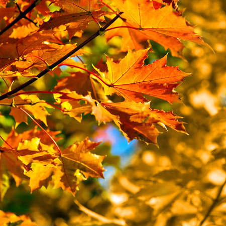 autumn colored leaves,  shallow focus