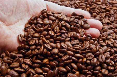 Coffee beans in male hand photo