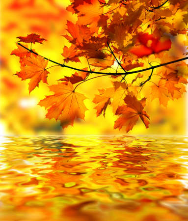 Maple tree branch with fall leaves over water