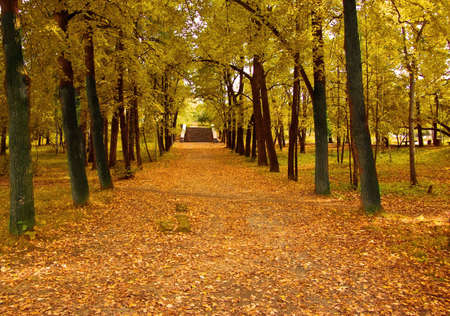 colorful autumn trees in the park photo