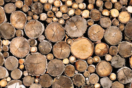 wall of log wood texture or background