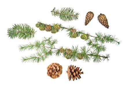 Reeks kegels met takken en Kerstmisornament op witte achtergrond Stockfoto - 22543715