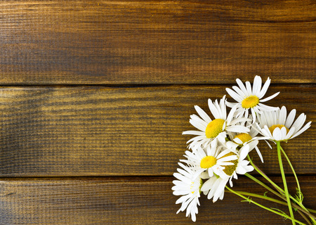 Daisy  chamomile flowers on wooden background