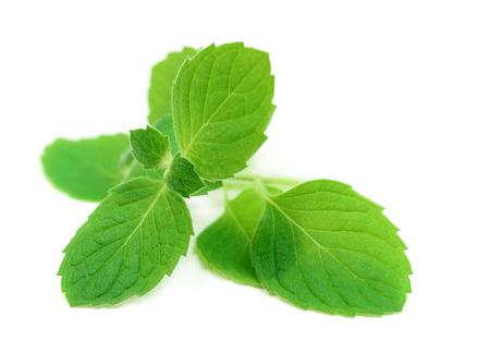 Fresh raw mint leaves isolated on white background Imagens