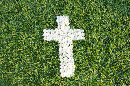 plant nature: Cross made from daisy flowers