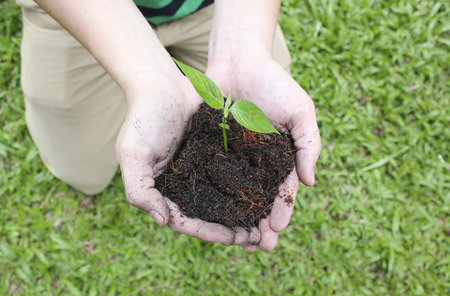 two hands: Two hands holding sapling soil. Stock Photo