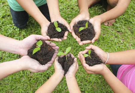 Hands holding sapling in soil surface Archivio Fotografico