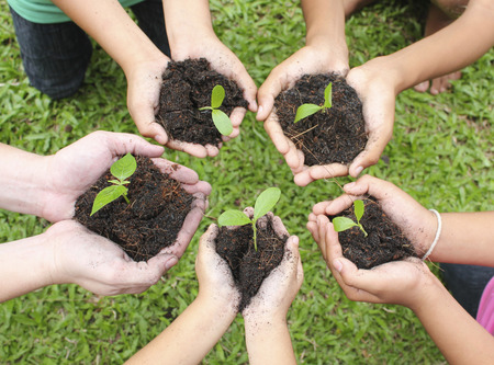 Hands holding sapling in soil surface Banco de Imagens