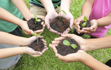 loam: Hands holding sapling in soil surface Stock Photo