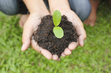 earth handful: Two hands holding plant with soil.