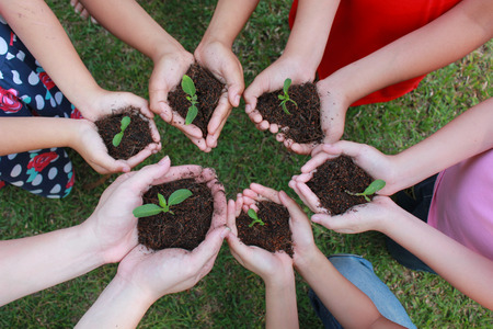 community garden: Hands holding sapling in soil surface on green grass background.