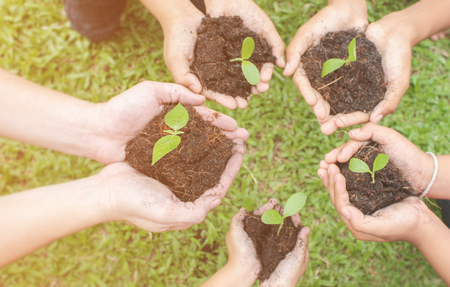 Children hands holding sapling in soil surface with plant, spring or summer time, Multicultural hands of children and adult with plant, Green environment and earth day concept.