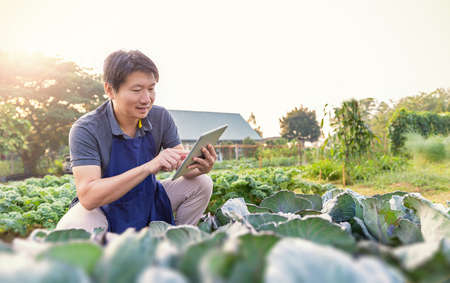 Portrait of happy sme owner asian man working with tablet gardening cabbage farm, nursery worker planting in organic farm, startup small business sme owner, asian farmer, fresh vegan food concept