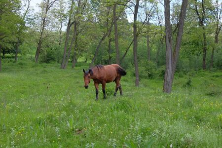 natural force: Wild horse in forest. Stock Photo