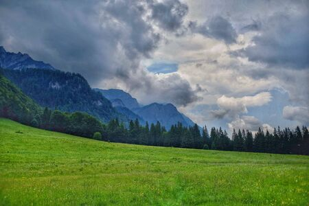 Gorgeous meadow from the Royal Sheep in Sinaia, Romania.