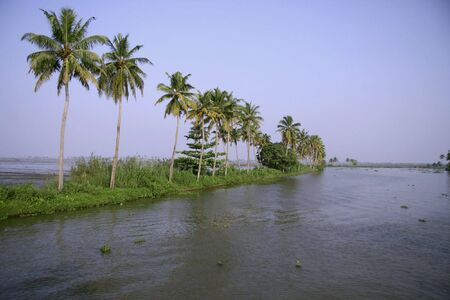 palm trees on backwaters, kerala, india photo