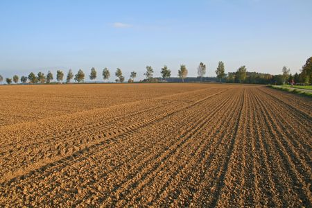 ploughed: ploughed field in autumn