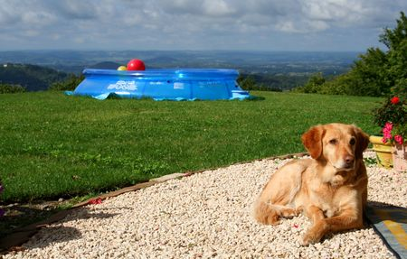 dog in garden dreaming to himself how happy he is Stock Photo - 4435813