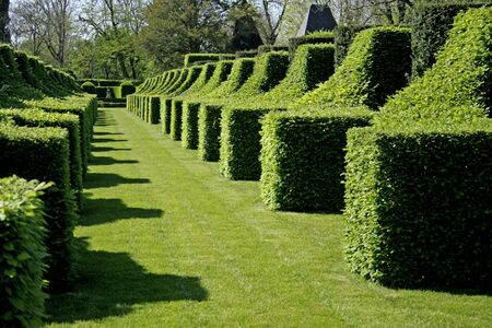 schrubs shaped in perspective in the garden of eyrignac, france